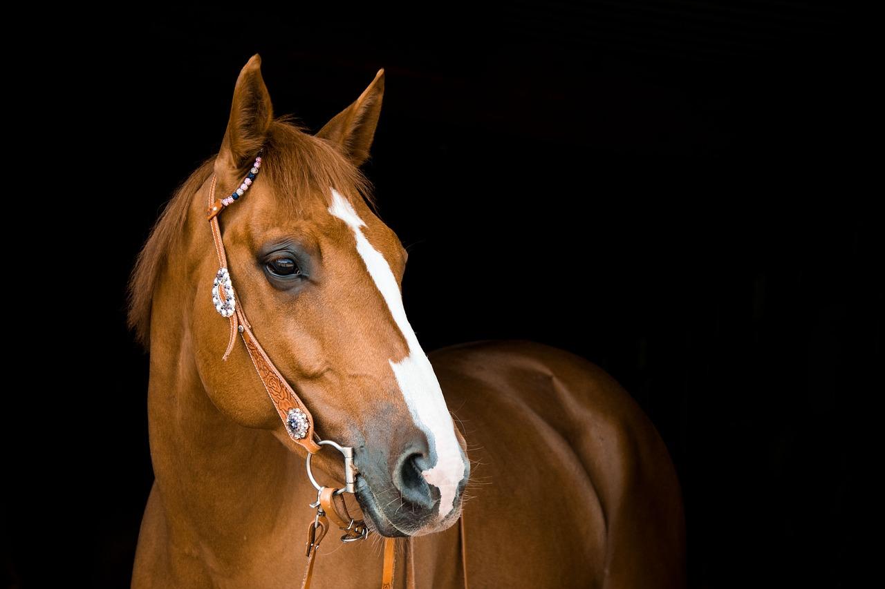 Arti Mimpi tentang Kuda