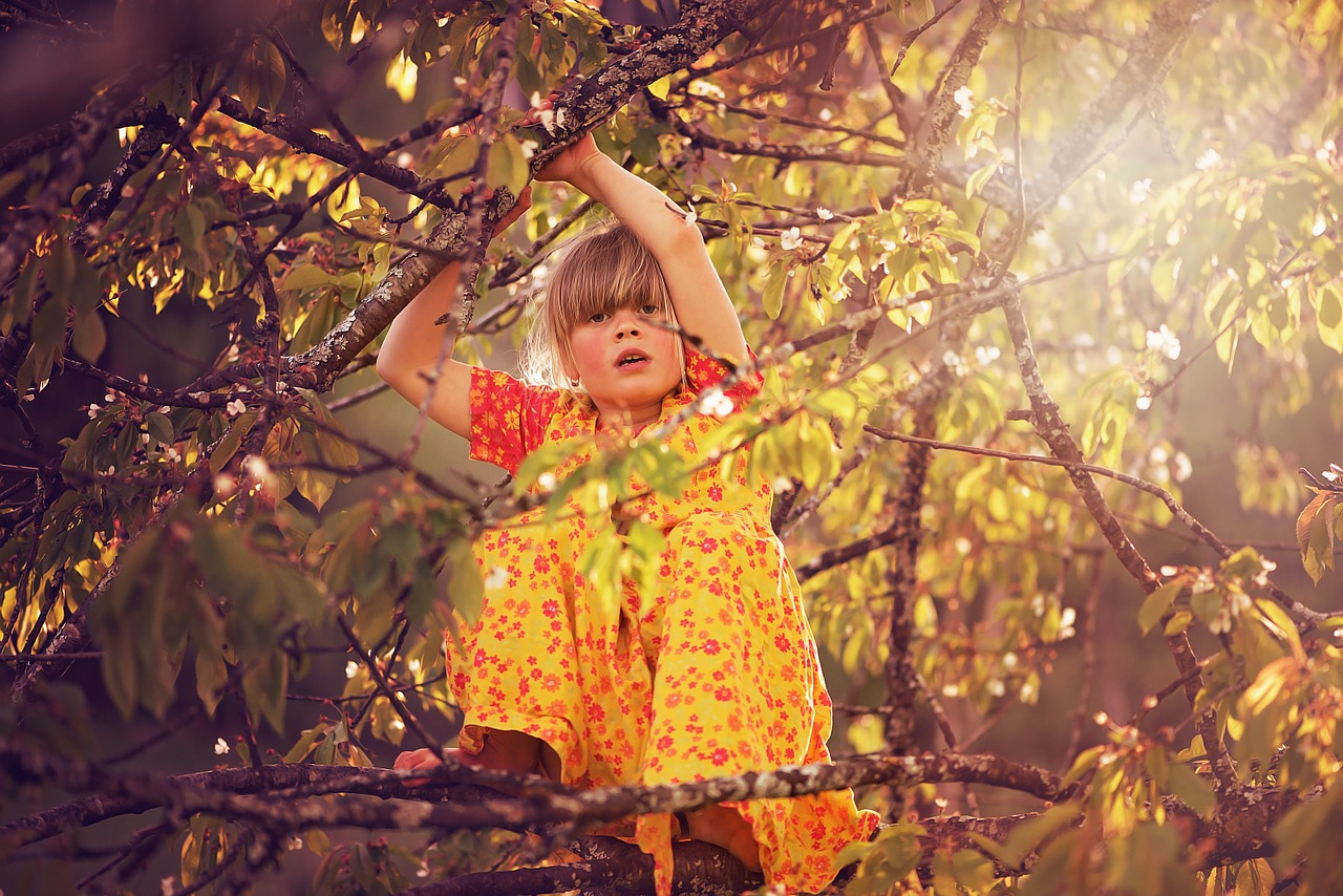 Arti Mimpi memanjat Pohon