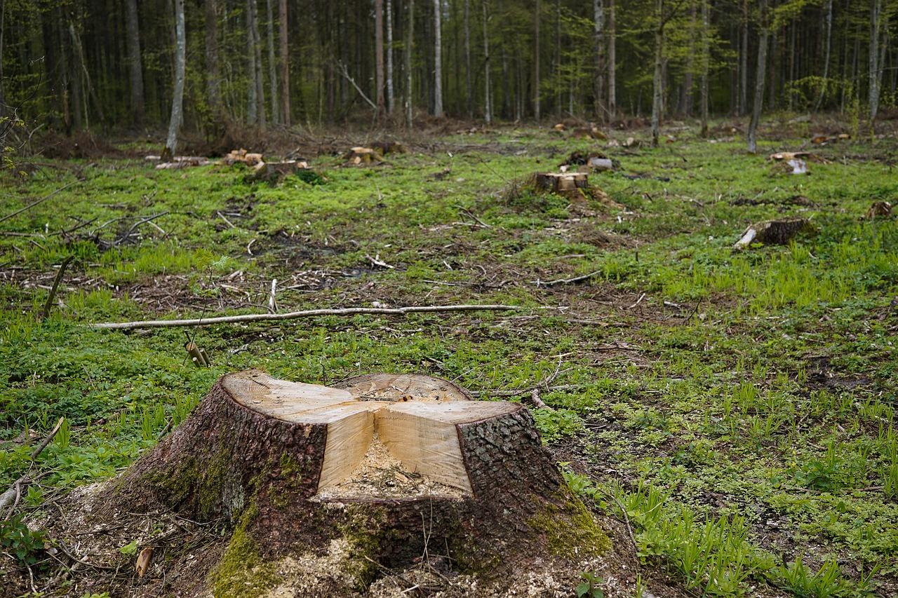 Arti Mimpi menebang Pohon