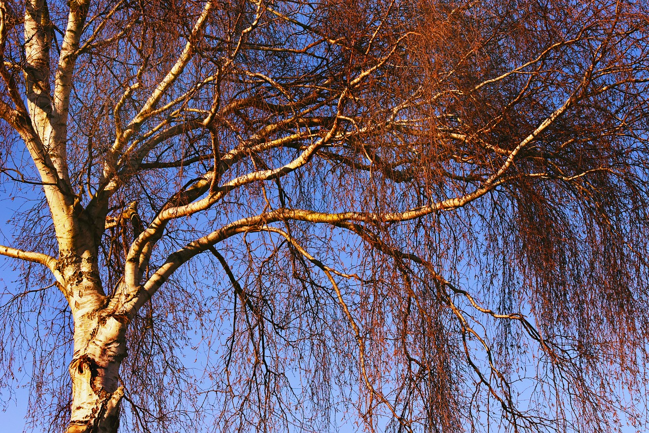 Arti Mimpi ranting Pohon