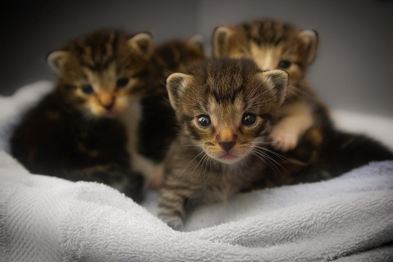 mimpi banyak anak kucing