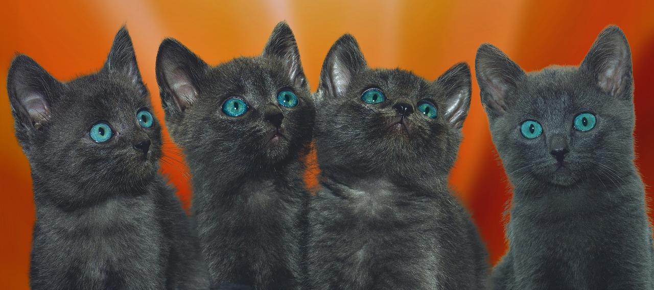 mimpi kucing hitam abu-abu