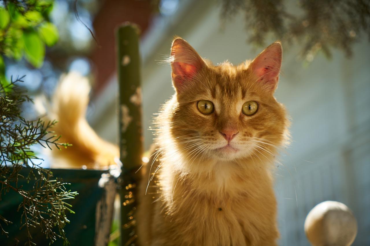 mimpi kucing kuning