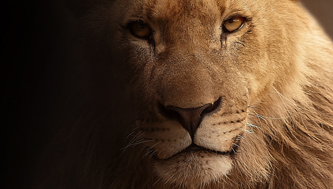 mimpi singa mengamuk