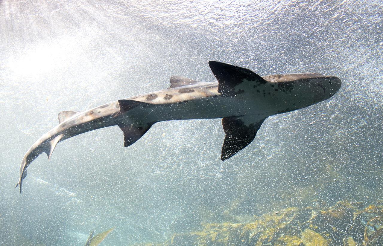 arti mimpi ikan hiu