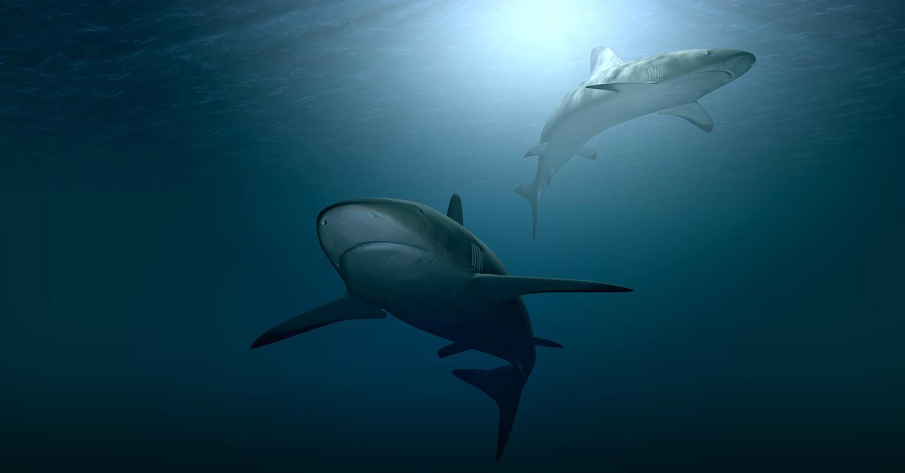 mimpi hiu mati