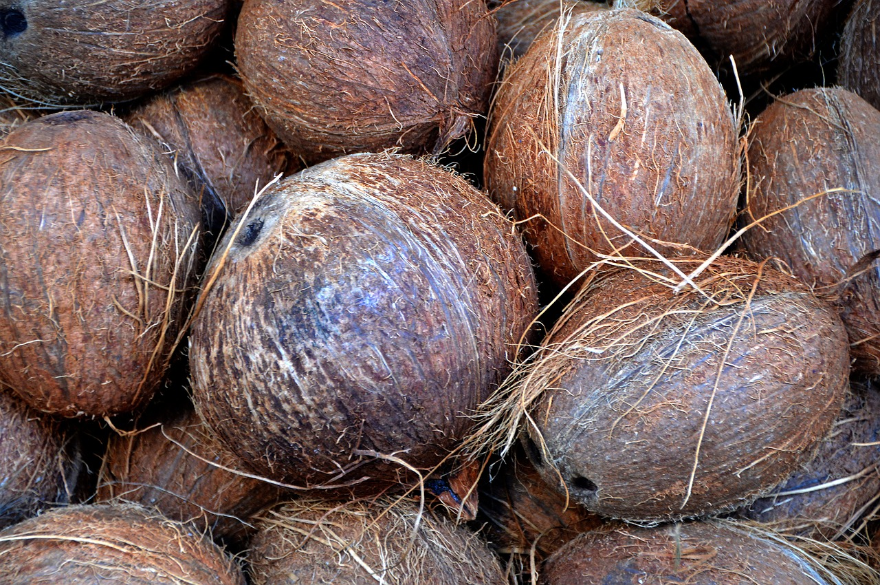mimpi kelapa tua