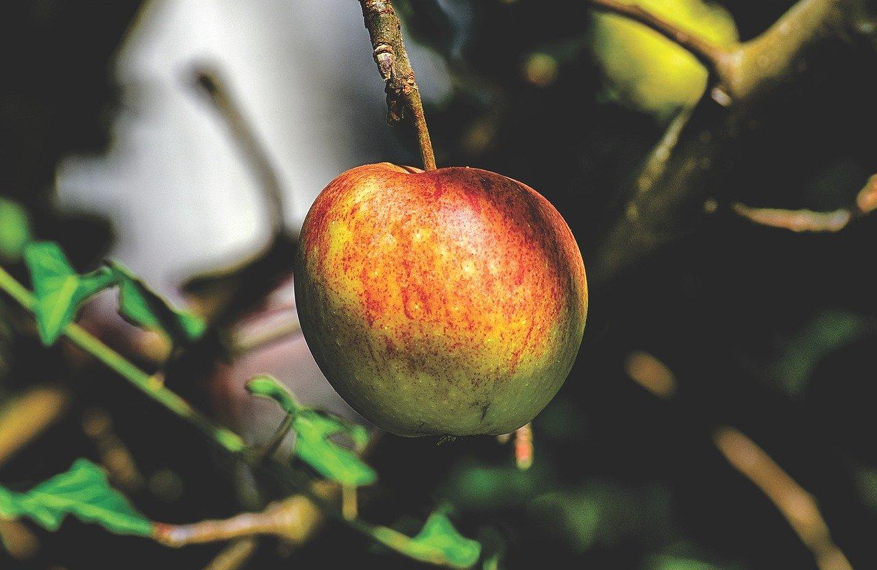 mimpi beli apel