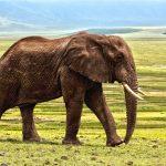 mimpi gajah jatuh dari langit
