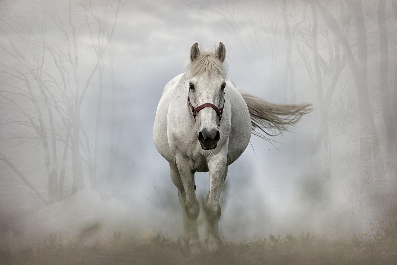 mimpi dikejar kuda putih