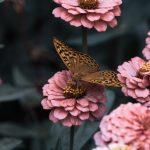 arti mimpi kupu kupu hinggap di tangan