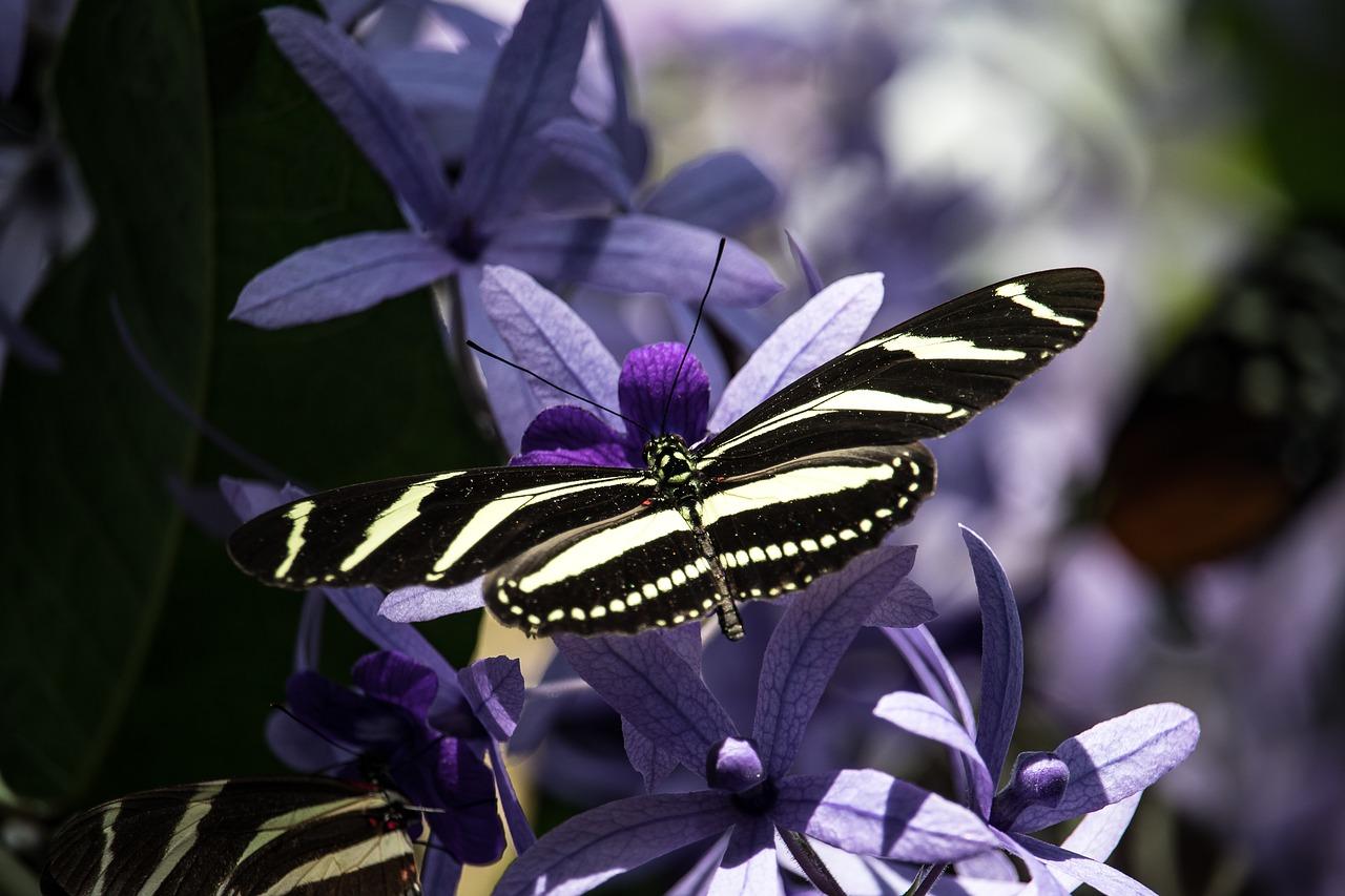 mimpi kupu kupu masuk rumah