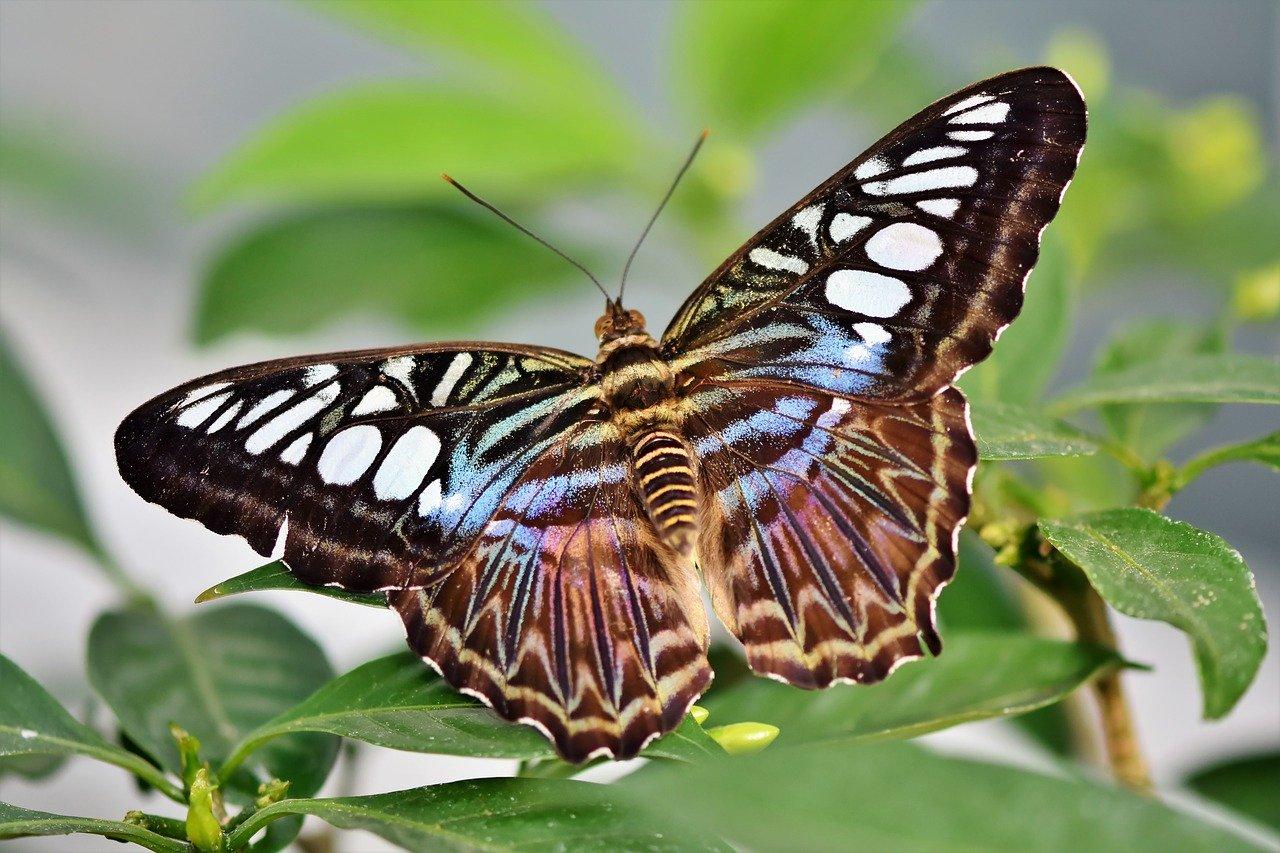 mimpi kupu kupu artinya