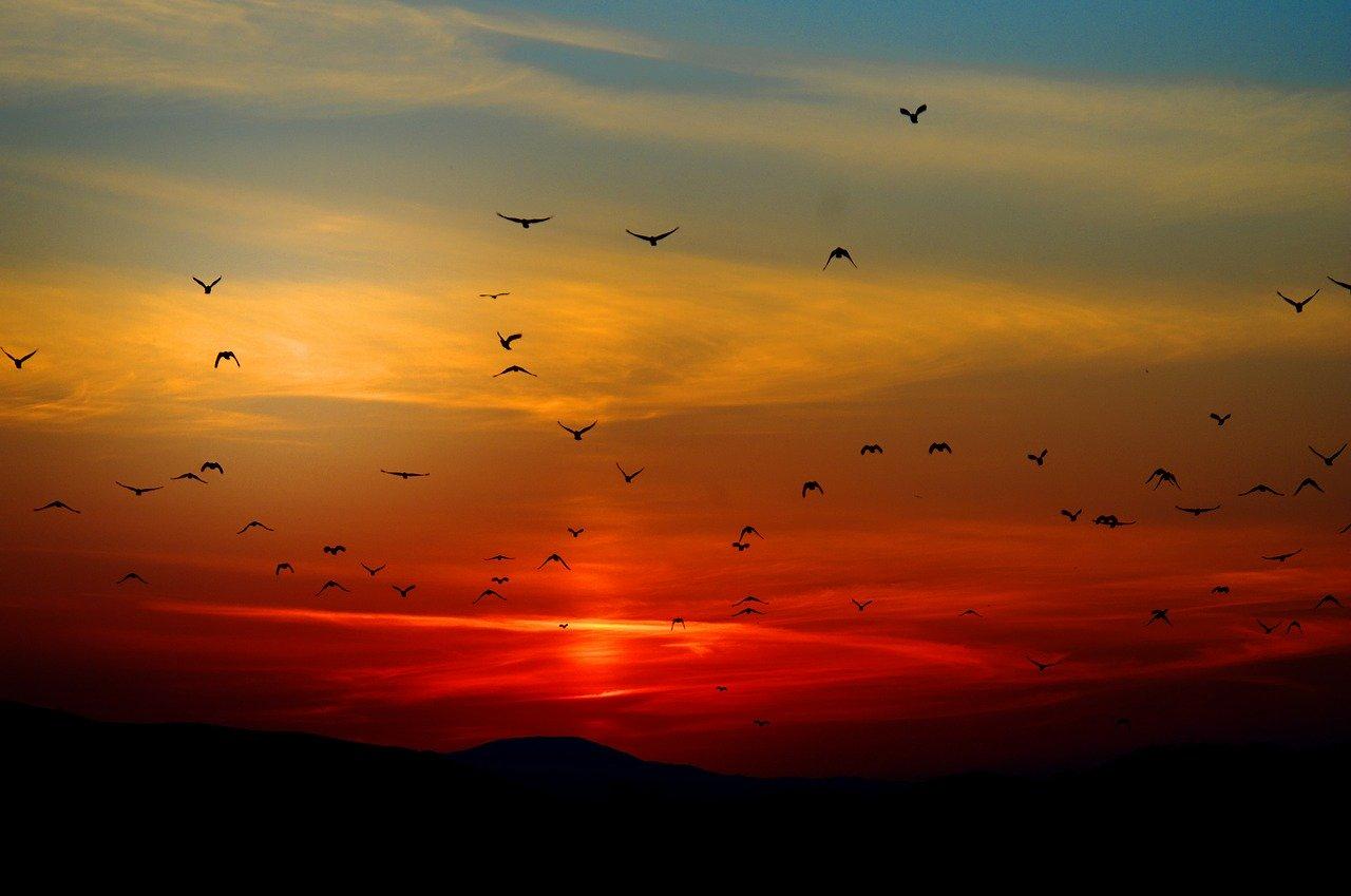 mimpi burung masuk rumah