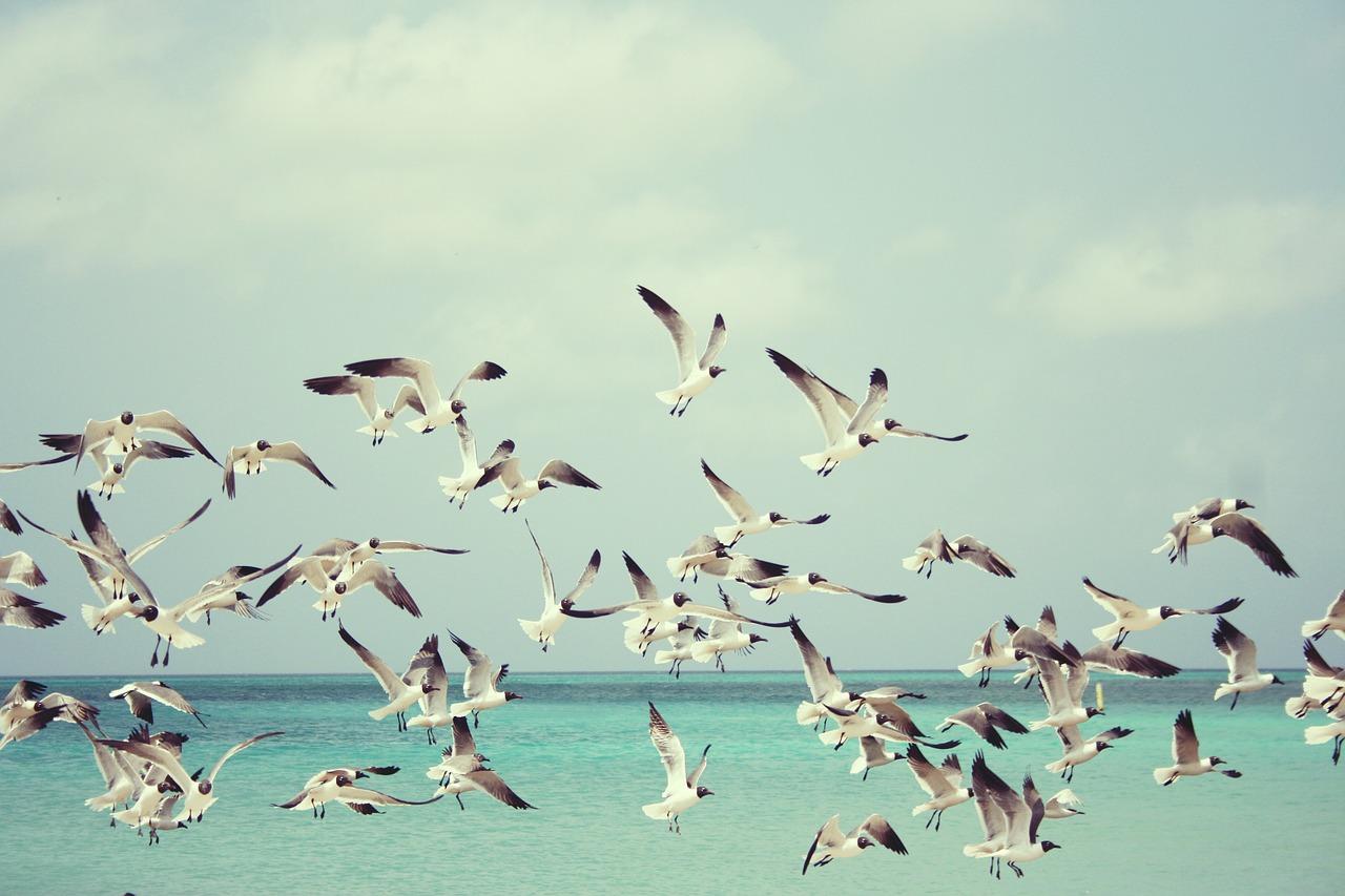 mimpi burung mati