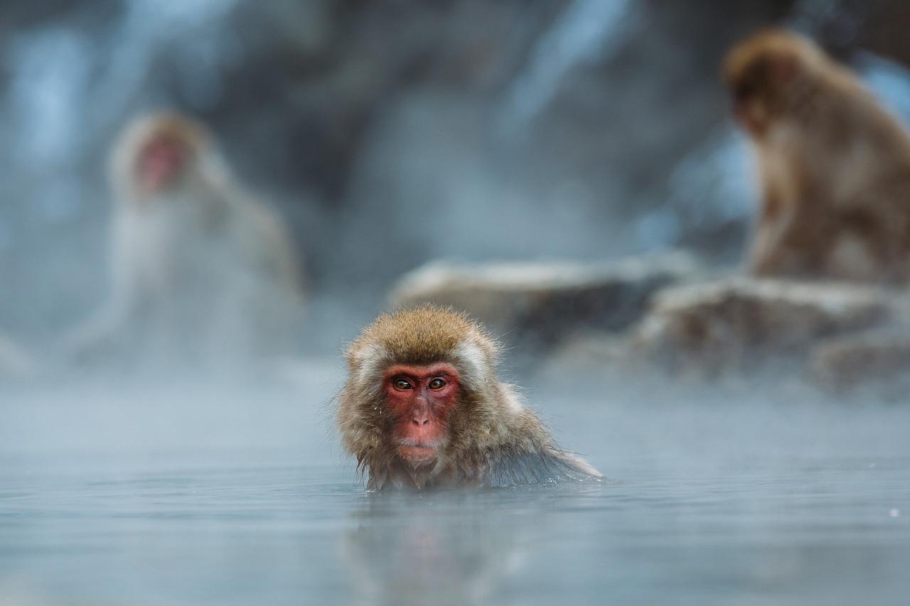 arti mimpi monyet masuk rumah