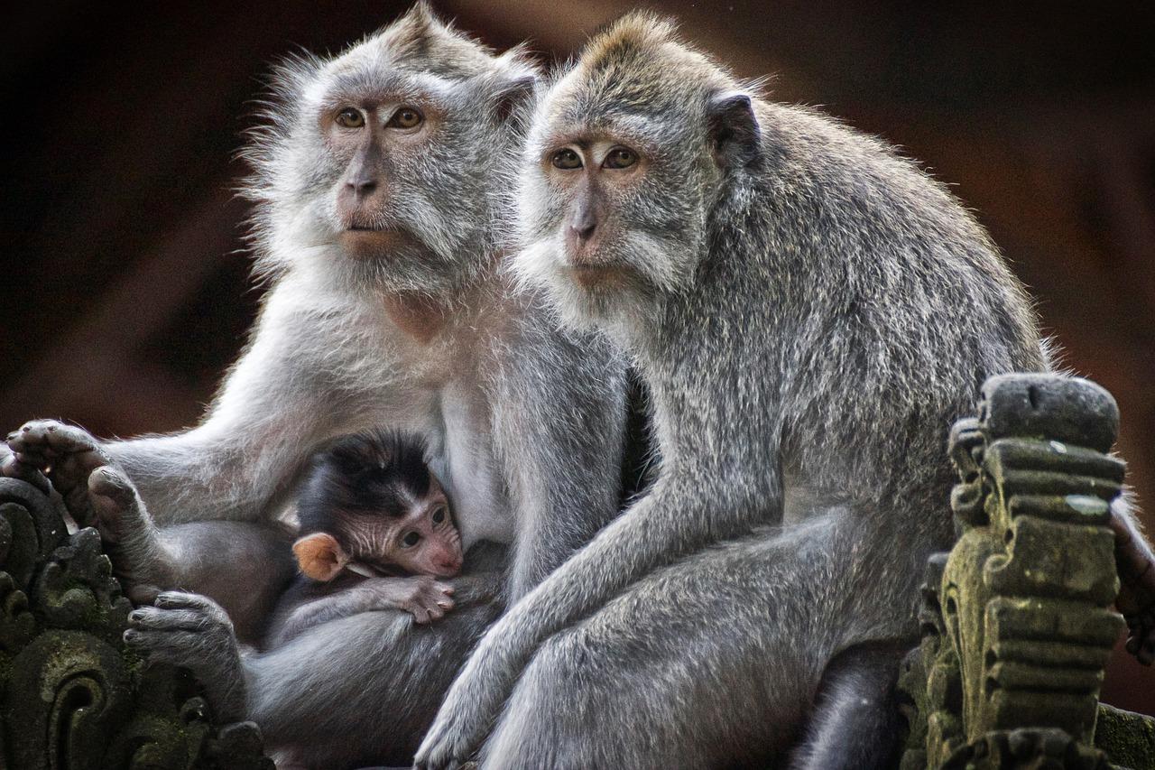 tafsir mimpi dikejar monyet