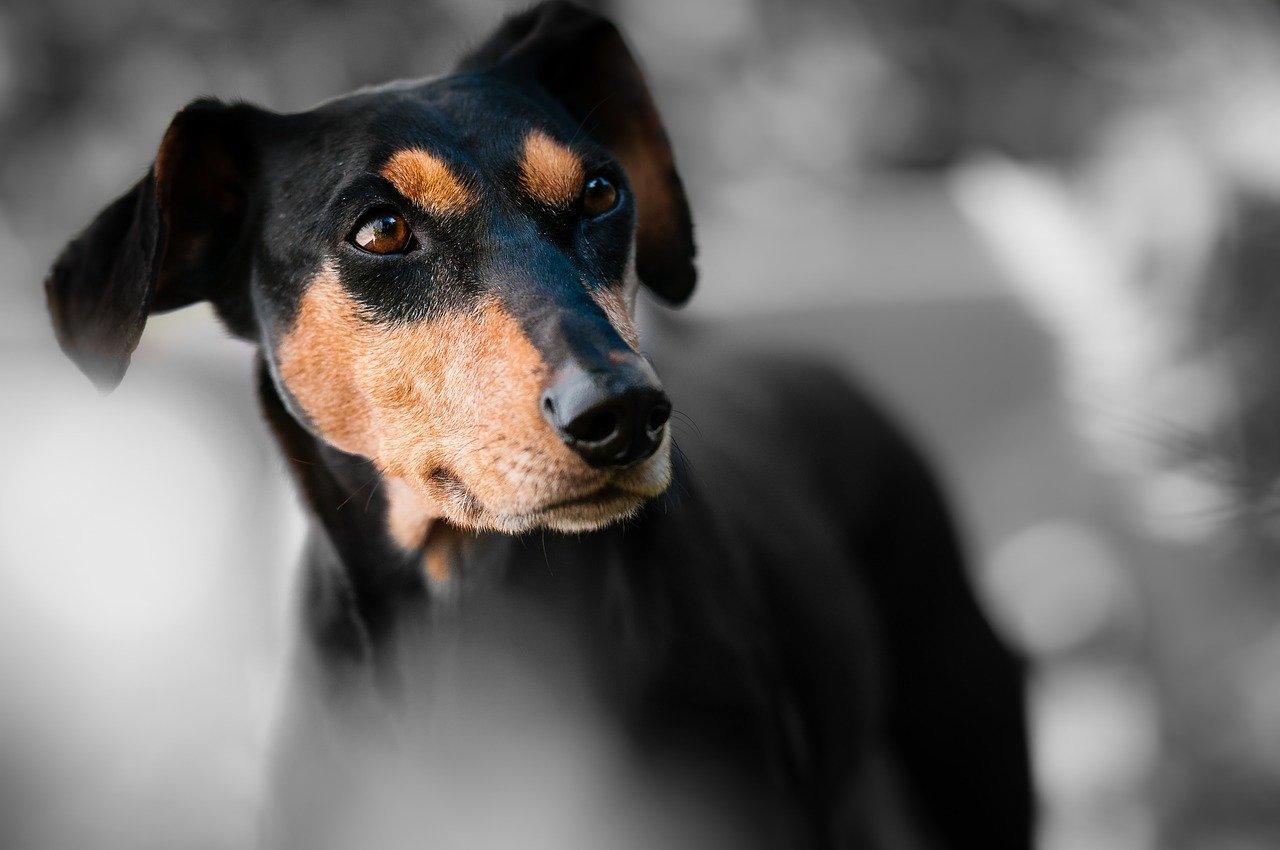 Arti Mimpi Anjing
