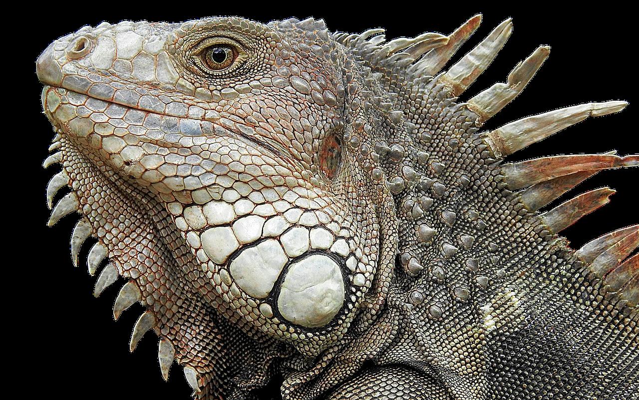 Arti Mimpi Iguana