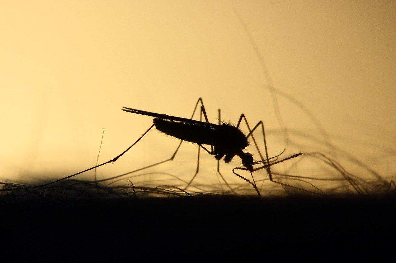 Arti Mimpi Nyamuk