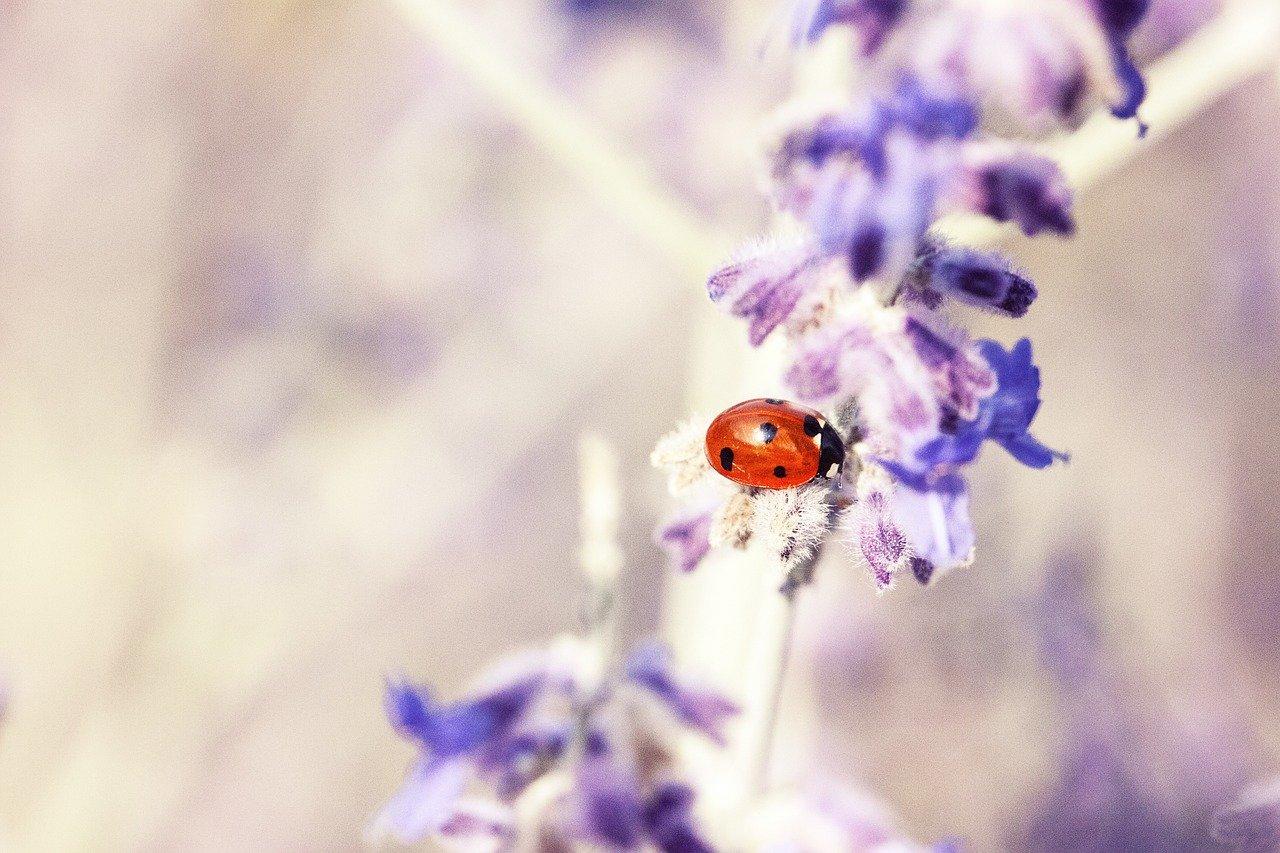 Arti Mimpi Kumbang
