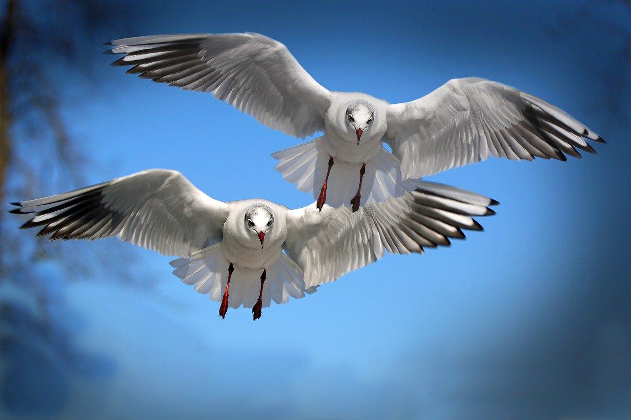 Arti Mimpi Burung Camar