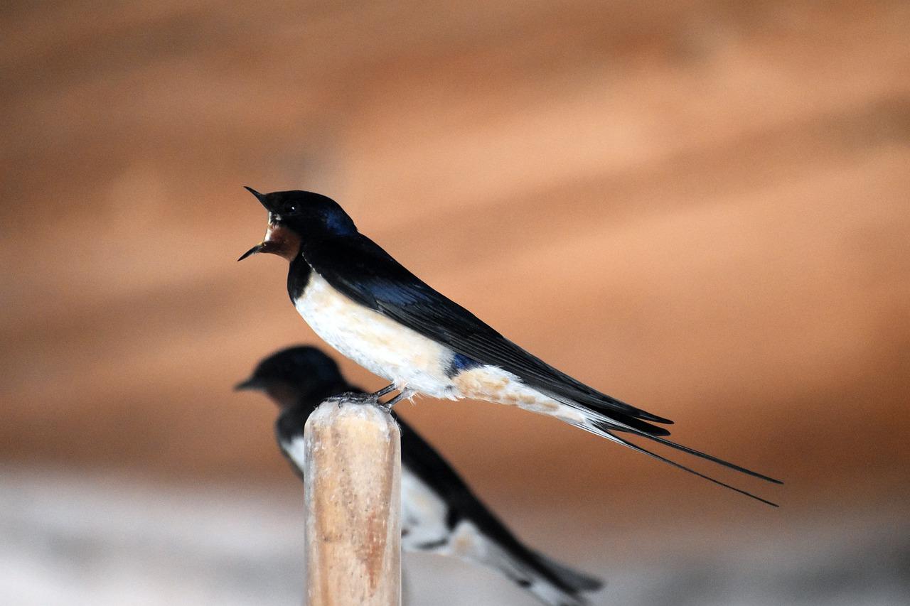 Arti Mimpi Burung Sriti