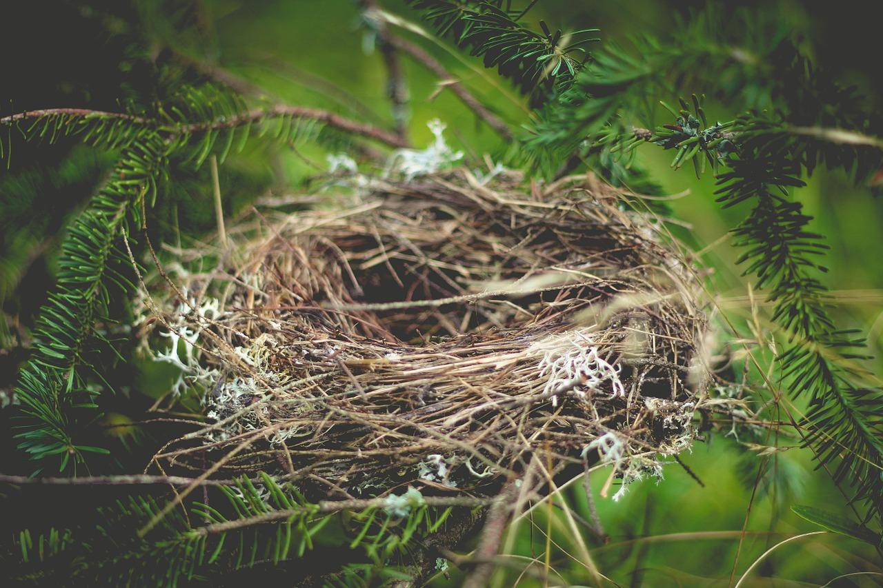 Arti Mimpi Sarang Burung